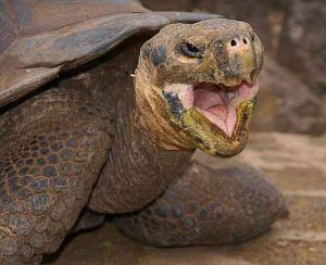 Kaplumbağalar Kış Uykusuna Yatar mı
